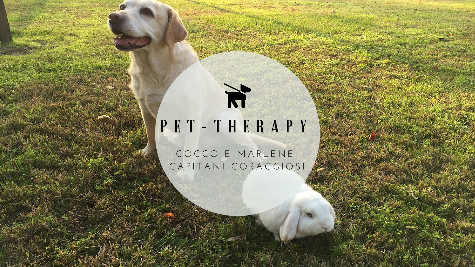 PET-THERAPy